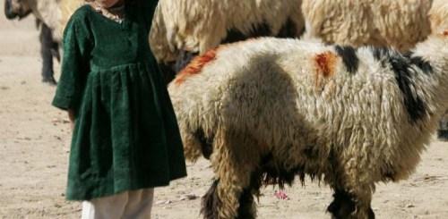 Eid Afghanistan