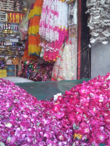 Gulshaan Roses Pakistan